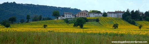 campi di girasole Toascana